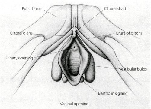 klitoris2.jpg